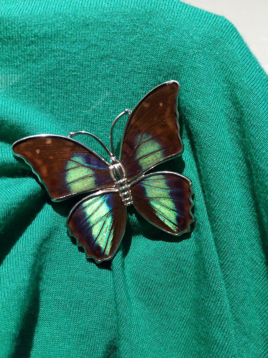 Прелестная бабочка