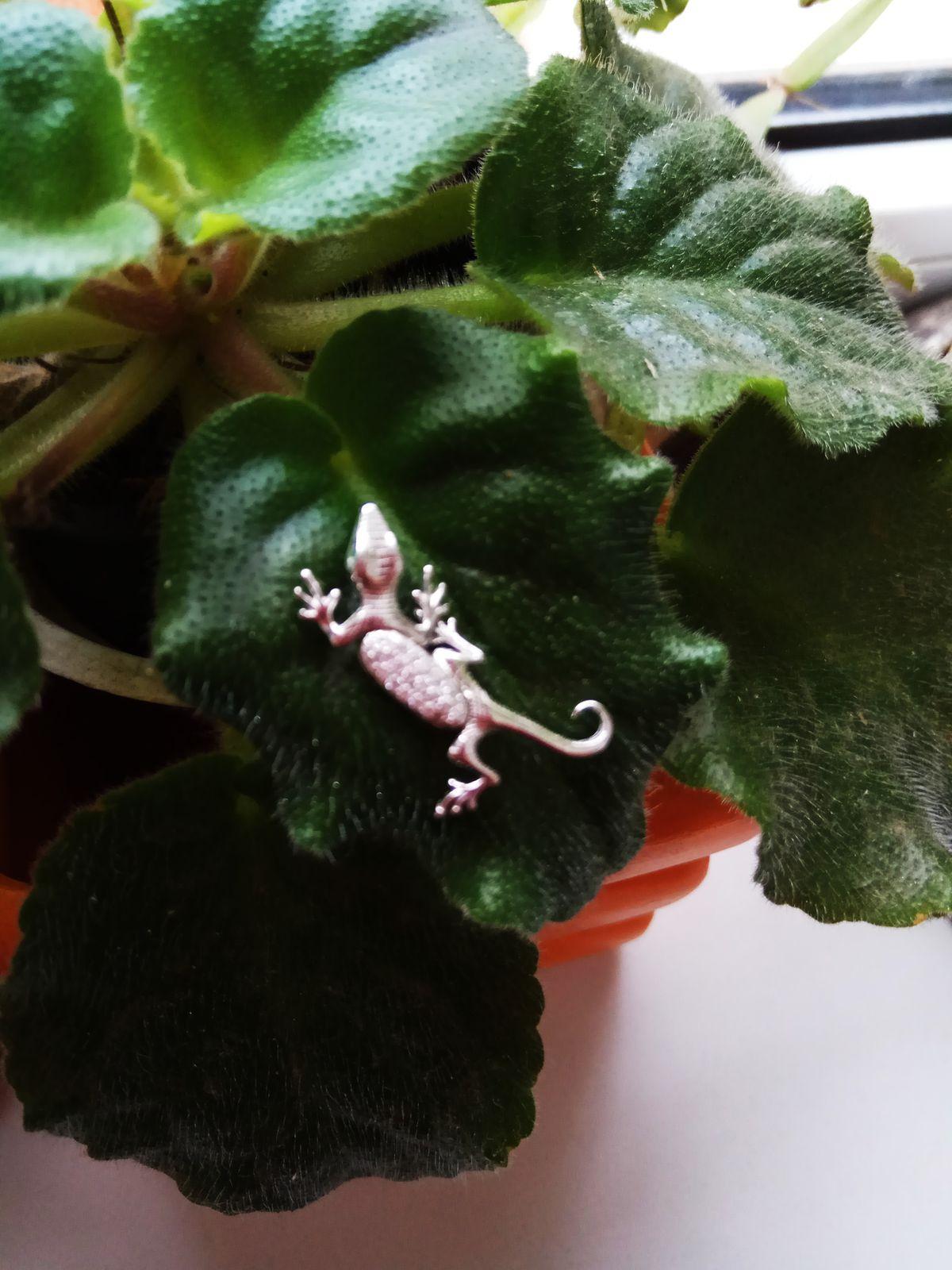 Очаровательная саламандра